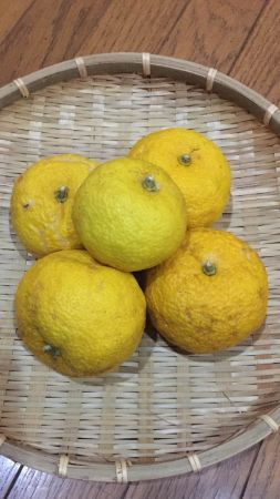 冬の果実 柚子