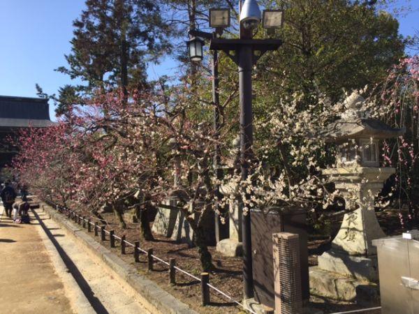 北野天満宮・梅花祭の茶席