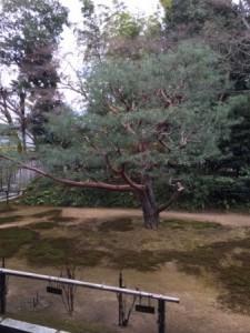 玉林院 庭