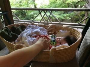 籠の赤ちゃん